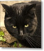 Molly Metal Print by Linsey Williams