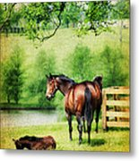 Mom And Foal Metal Print by Darren Fisher