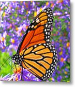 Monarch Butterfly Metal Print by Olivier Le Queinec