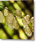 Money On Trees Metal Print by Christi Kraft