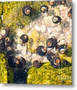Monterey Bay Tide Pools Metal Print by Artist and Photographer Laura Wrede
