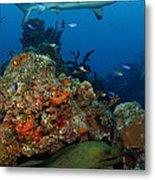 Moray Reef Metal Print by Carey Chen