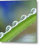 Morning Dew Drops Metal Print by Heiko Koehrer-Wagner
