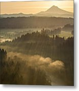 Morning Has Broken Metal Print by Lori Grimmett