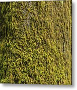 Moss Covered Tree Olympic National Park Metal Print by Steve Gadomski