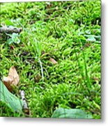 Mossy Bed Metal Print by Christina Frey