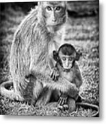 Mother And Baby Monkey Black And White Metal Print by Adam Romanowicz