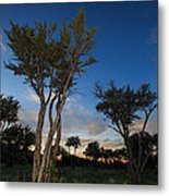 Mountain Mahogany Forest Metal Print by Nick Oman
