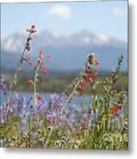 Mountain Wildflowers Metal Print by Juli Scalzi