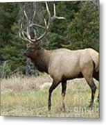 Mr Majestic Metal Print by Bob Christopher