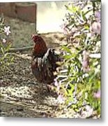 Mr. Rooster Takes A Stroll Metal Print by Artist and Photographer Laura Wrede
