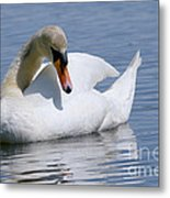 Mute Swan 1 Metal Print by Sharon  Talson