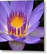 My Soul Dressed In Silence Metal Print by Sharon Mau