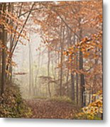 Mystic Woods Metal Print by Anne Gilbert