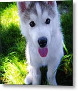 Nanook Of The North Metal Print by Bill Cannon