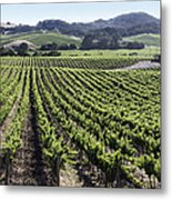 Napa Valley Vineyard Metal Print by Dee  Savage