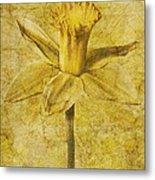 Narcissus Pseudonarcissus Metal Print by John Edwards
