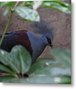 National Zoo - Birds - 011329 Metal Print by DC Photographer
