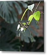 National Zoo - Butterfly - 12124 Metal Print by DC Photographer