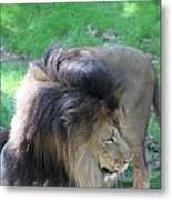 National Zoo - Lion - 01132 Metal Print by DC Photographer