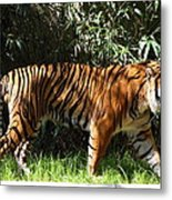 National Zoo - Tiger - 01138 Metal Print by DC Photographer