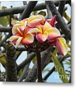 Natural Bouquet  Metal Print by Mindy Sue Werth
