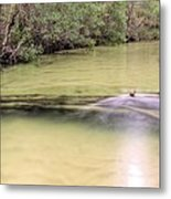 Natural Florida Metal Print by JC Findley