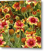 nature - flowers -Blanket Flowers Six -photography Metal Print by Ann Powell