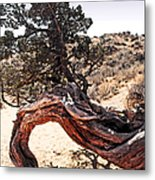 Nature's Abstract Metal Print by Linda  Parker