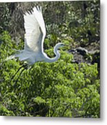 Need More Branches Metal Print by Carolyn Marshall