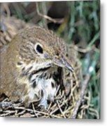 Nest In A Tree Metal Print by Susan Leggett