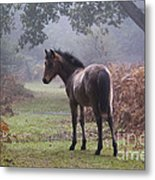 New Forest Pony Metal Print by Dave Pressland FLPA