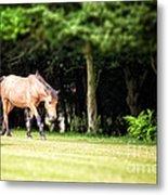 New Forest Pony Metal Print by Jane Rix