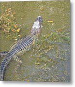 New Orleans - Swamp Boat Ride - 121258 Metal Print by DC Photographer