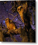Night Owls Metal Print by Phil Penne