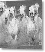 Nine White Horses Run Metal Print by Carol Walker