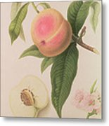 Noblesse Peach Metal Print by William Hooker