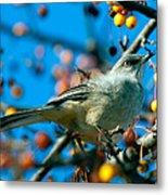 Northern Mockingbird Metal Print by Bob Orsillo