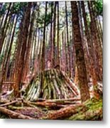 Northwest Old Growth Metal Print by Spencer McDonald