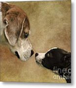 Nose To Nose Dogs Metal Print by Linsey Williams
