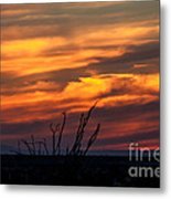 Ocotillo Sunset Metal Print by Robert Bales