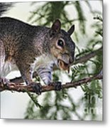 Ok You Caught Me Metal Print by Deborah Benoit