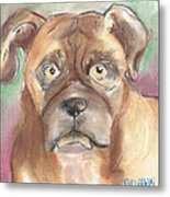 Old Boxer Metal Print by Christine Callahan