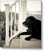 Old Dog On A Front Porch Metal Print by Diane Diederich