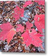 Old Rag Hiking Trail - 121260 Metal Print by DC Photographer