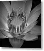 Om Mani Padme Hum Hail To The Jewel In The Lotus Metal Print by Sharon Mau