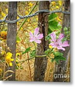 On The Fence Metal Print by Lainie Wrightson