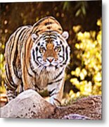 On The Prowl Metal Print by Scott Pellegrin