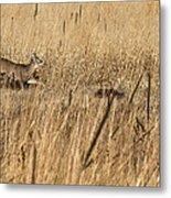 On The Run 2 Metal Print by Thomas Young