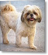 One Happy Little Dog Metal Print by Lainie Wrightson